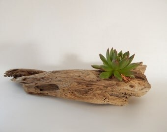 "3 Pieces Large Driftwood - 20-24"" long x 2.5-5"" wide - Tabletop Centerpiece ~ Succulents ~ Candles - Rustic Decor - Wedding Decor"