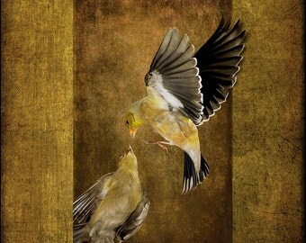 Feisty Finches