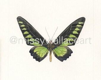 Butterfly #18 (Original)