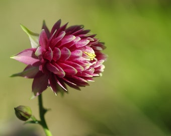Photography pink flower_download_natur_Provence-France