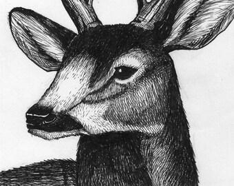 Original ink drawing: deer