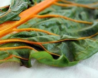 Swiss Chard Orange Vegetable Seeds (Beta vulgaris) 50+Seeds