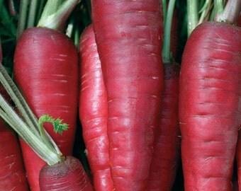 Carrot Atomic Red Vegetable Seeds (Daucus carota) 100+Seeds