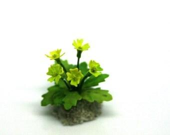 OOAK Yellow Primula~12th Scale~Cold Porcelain Flowers~ Dolls House Miniature~Fairy Garden~Handmade Miniature