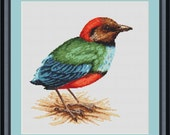 Blue Bellied Pitta Bird Counted Cross Stitch Pattern (9.43 x 9.93 inches or 23.95 x 25.22 cm) download printable PDF file (4056)