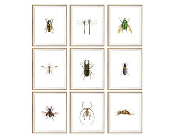 Insect Art Print SET of 9. hornet print, beetle print, dragonfly print, dragonfly art, hornet illustration, insect illustration, 8x10, a4