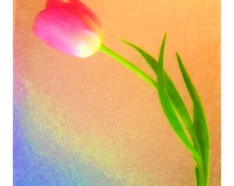 Tulip Art: 'Tulip Impact #7' (giclée)