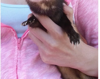 Softmount Ferret
