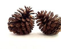 Giant pine cones, photo prop pine cones, natural pine cones, giant cones, real pine cones, large pine cones, jumbo pine cones