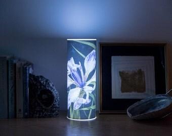 Photo light, luminary of an Iris called Midnight