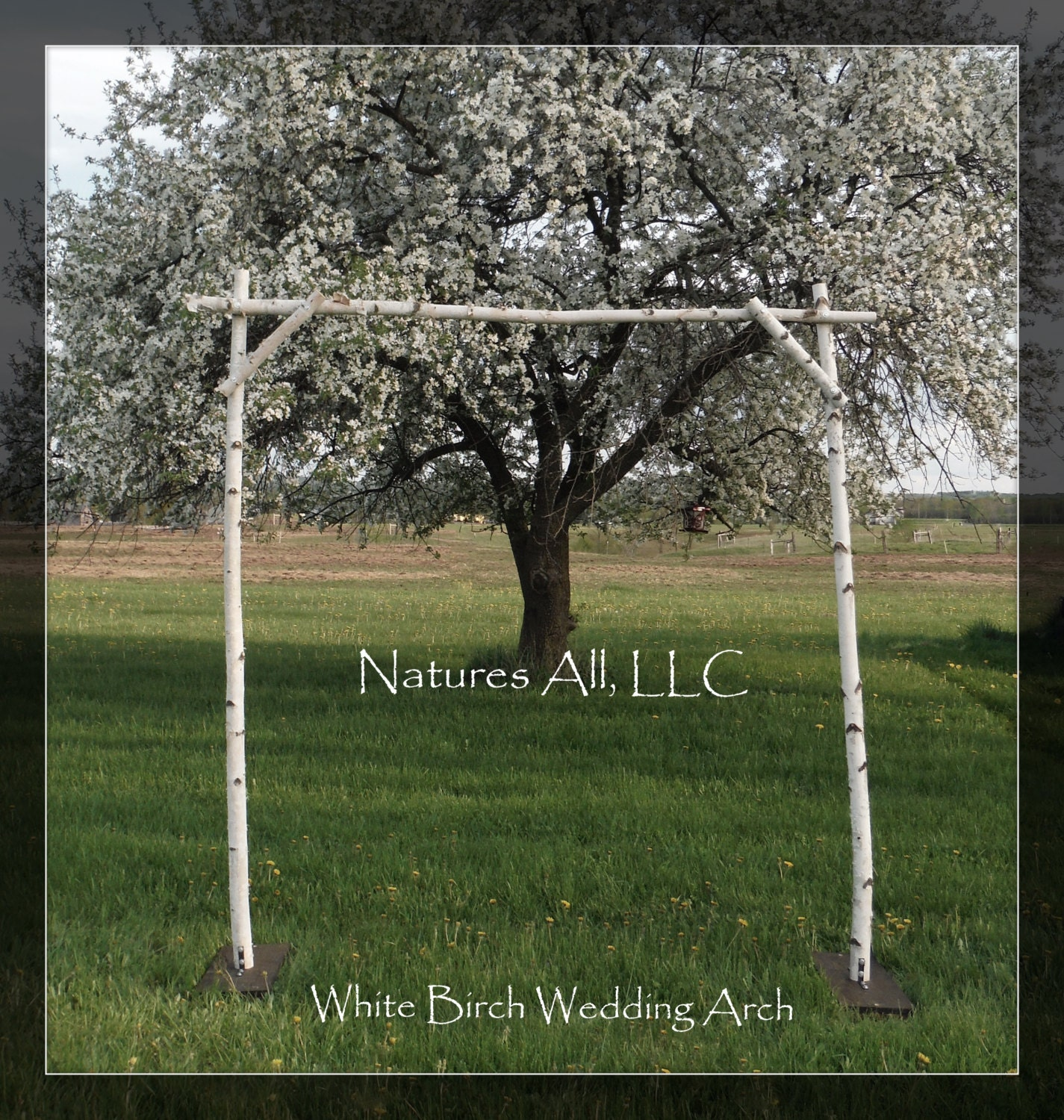 Wedding Arch Diy Ideas: White Birch Wedding Arch/White Birch Arbor/Complete Kit For