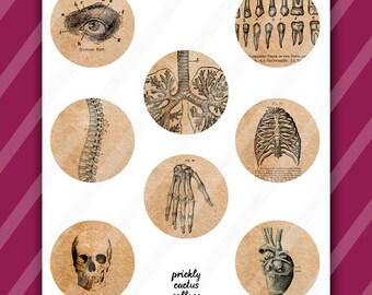 Vintage Anatomy Clip Art, Digital Collage Sheet, 2.5 inch circles, Digital Downloads, medical illustration, art for mirrors