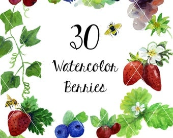 Watercolor Berries and Vines Clipart (Hand Painted)