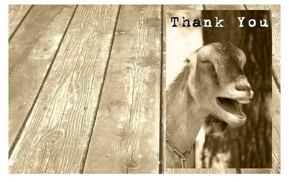 Goat Thank You Card Farm Thank You Birthday Thank You
