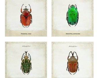 Photography botanical insect gift for lovers of botany, 8 5x5 photos to 60.00, Fine Art Print, Vintage Photo, Nature