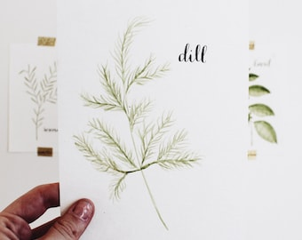 Dill Watercolor Herb
