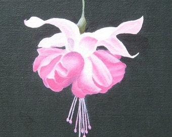 Fuchsia Blossum