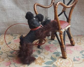 Brilliant 1950's Toy Poodle