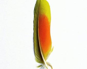 Feather Fervour