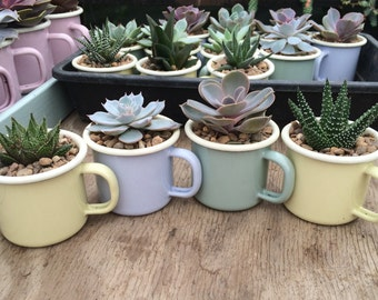 Enamel Espresso Cups in Ice-Cream Colours with a Succulent
