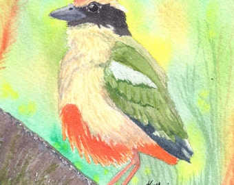 Fairy Pitta tropical bird watercolor painting, original, signed, 4x6