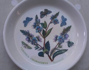 Dish garden Etsy
