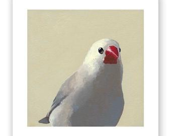 Finch 2 - 5 x 5 Art Print - Bird - Animal -  Gift