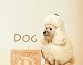 dog art, ABC art, toy photo, nursery art, nursery decor, poodle photo, dog photo, child room art, letter art, alphabet photo, alphabet art