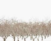 Nordic Landscape Winter Picture - Minimal Winter Trees Picture - Niagara Landscape Photography - Modern Nordic Nature Art - White Brown