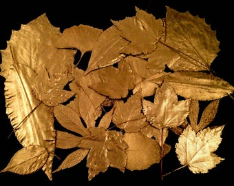 12 GOLD PAINTED LEAVES, Real Pressed Fall Leaf Assortment, Hand Painted Golden - Perfect for Festive Fall & Holiday Decor, Candles, Cards