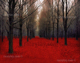 Rustic Decor, Red and Black Forest Print, Nature Photography, Fall Forest, Red Trees, Red Forest, Fiery Autumn
