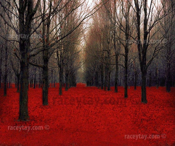 "The Red Forest- Fine Art - Nature Photography - Rustic Fall Decor- Bare Trees ""Fiery Autumn"""