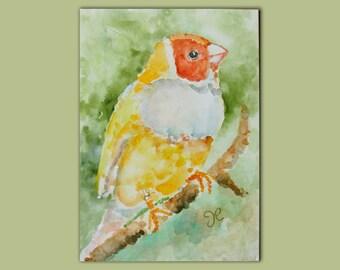 Finch Painting, Original Bird Painting, Bird Watercolor, Watercolor Painting, 5x7, Citrus, Orange, Bird Wall Art, Original Bird Art