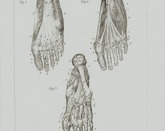 1834 Antique ANATOMY print, veins of the feet, foot