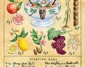Botanical Scorpion Bowl (Classic Tiki Cocktail) Print