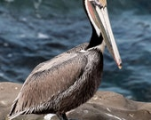 Pelican Photograph, 8 x 10 Wall Art Framed