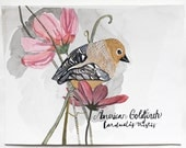 Bird Art- Natural History Painting-American Goldfinch Original Watercolor