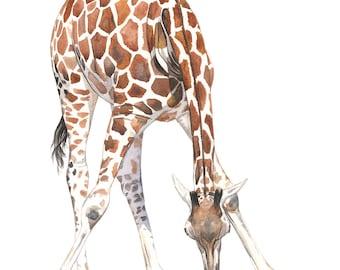 Giraffe Painting -  giraffe watercolor painting - print of watercolor painting  5 by 7 print - giraffe art - wildlife painting, G2014