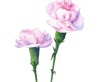 Carnation print of watercolour painting, C12016, 5 by 7 print, carnation watercolor painting, pink carnation painting, botanical wall art