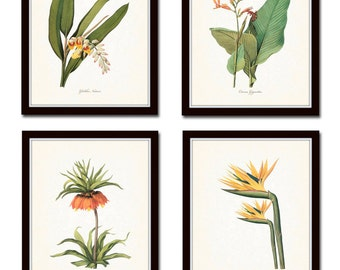 Tropical Botanicals Print Set No. 5, Giclee, Art Prints, Antique Botanical Prints, Wall Art,Vintage Botanical Prints, Flower Prints, Coastal