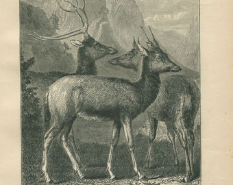 1889 The Chinese Elaphure Engraving,  Deer Black and White Antique Print, Cervid, Woodland Animal