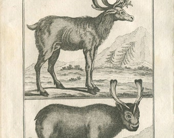 1811 Vintage Print Reindeers Zoology Copper Engraving, Buffon. Black and White
