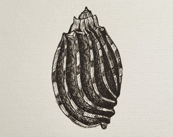Harp Shell Pen and Ink Drawing on Paper with Mat