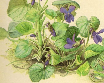 1910s Antique Violets flower art print, printed 1970, woodlands flowers 34  floral bookplate prints, botanical flower art illustration