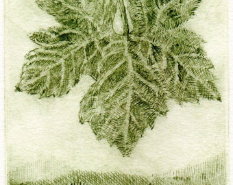 Dry point etching of a grape leaf suspended over a vineyard.