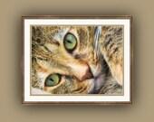 Green Eyed Tabby Cat Feline Portrait Fine Art Photography Print