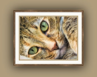 Green Eyed Tabby Cat Feline Portrait Fine Art Photography Print