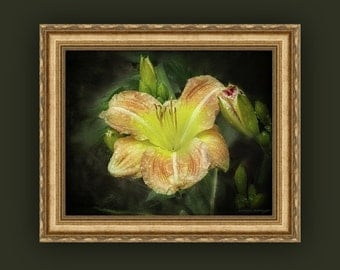 Dramatic Beautiful Daylily Blooms, Flowers and Raindrops, Peach Orange Yellow Green Floral Fine Art Photography Print