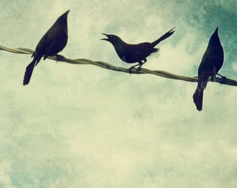 Black Bird Photography Download, Digital Bird Image, Digital Bird Photo, Birds on a Wire, Blackbird, Black Bird Family, Blue Cottage Chic,