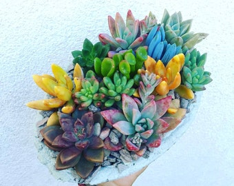 Spring Succulent Oasis in concrete handcrafted planter